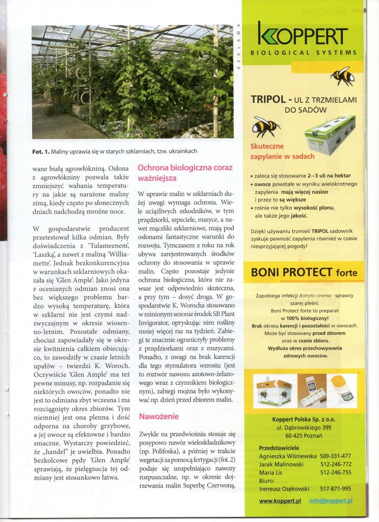Artykul-o-KW-maliny-I12XXI002