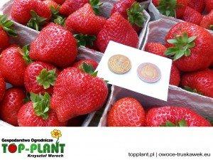 Owoce truskawek TOP-PLANT