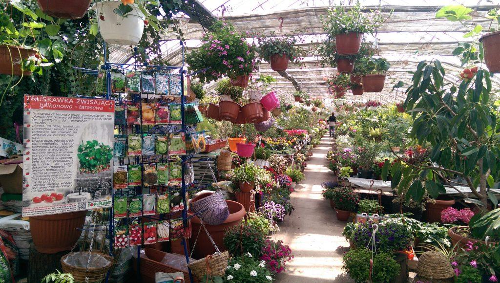 14160ce3d6f677 Praca w Centrum Ogrodniczym Centrum Ogrodnicze TOP-PLANT™