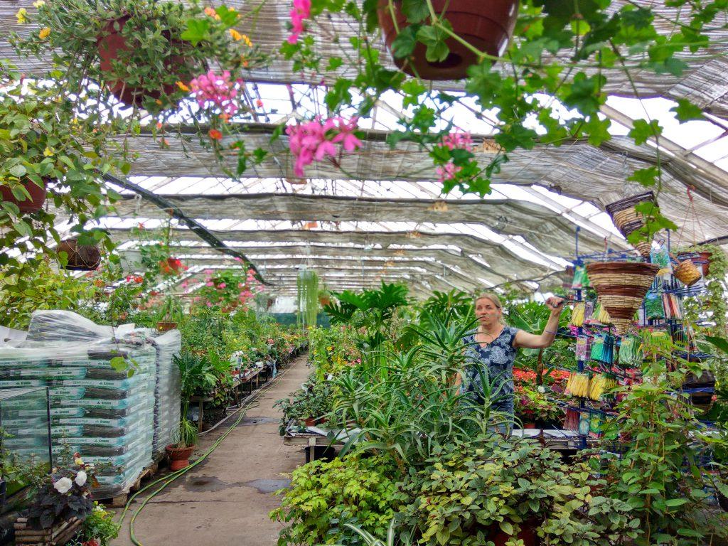 dfd9c4c422b8a5 Centrum ogrodnicze - kwiaty doniczkowe Centrum Ogrodnicze TOP-PLANT™