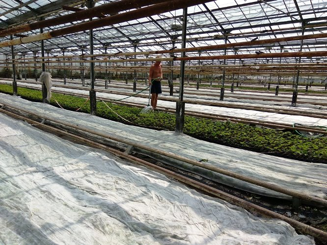 Работа с поливе растений