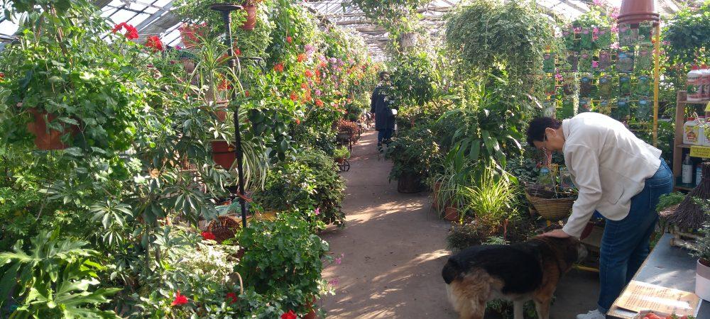 e3797188ecba4a Centrum Ogrodnicze TOP-PLANT™ - Największa Oferta w ...